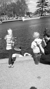 feeding the ducks,swans and geese